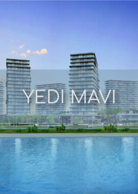 yedi mavi featured image